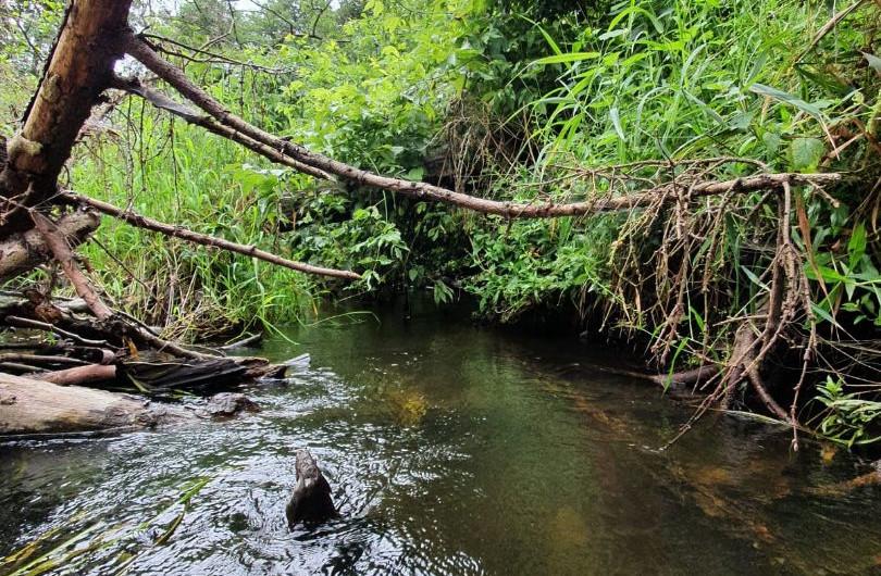 spływy kajakowe Płock